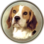 Beagle (R) Single (150mm)