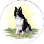 [T BCOLLIE2 B150] Border Collie 2