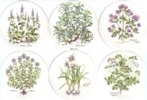 Herbs Set of 6 (150mm)