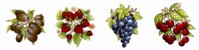 Mixed Fruit Set of 4 (150mm)