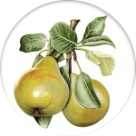 Pears Single (90mm)
