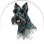 Scottish Terrier (CD) Single (90mm)
