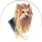 Yorkshire Terrier (CD) Single (150mm)