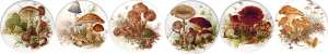 Mushrooms set of 6 (150mm)